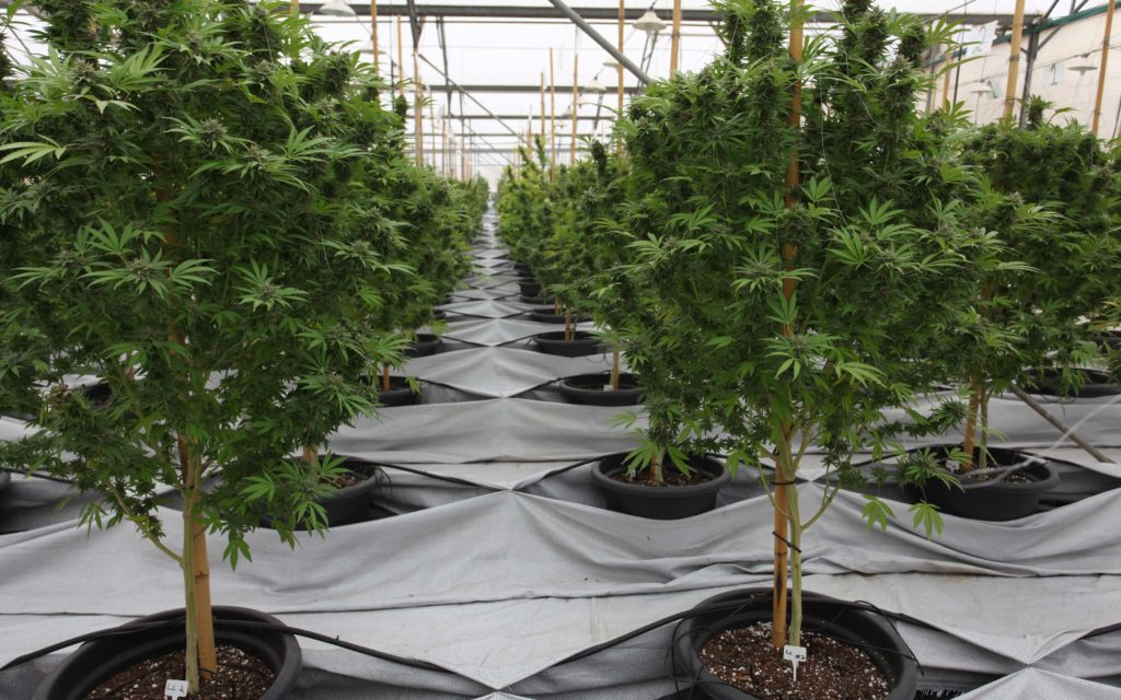 Miracle-No. Nico's Nuggets: Understanding Plant Food Basics for New Grower.