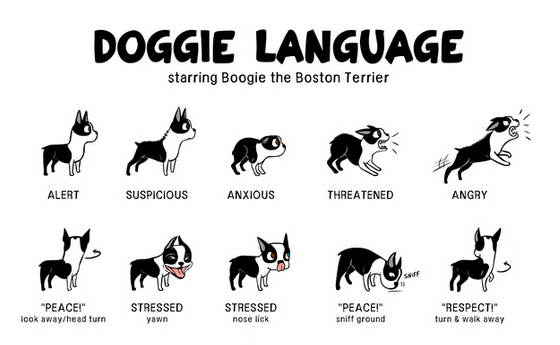 Do you know your pup's body language? view the full #