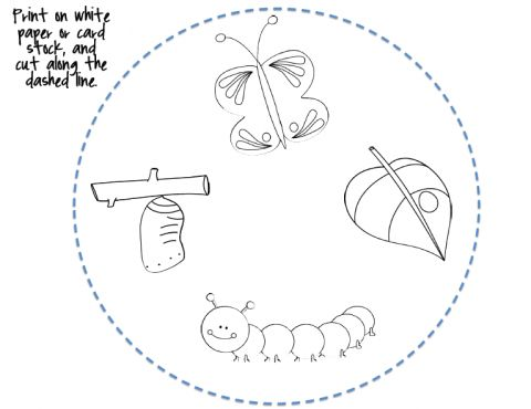 All Worksheets » Life Cycle Of A Butterfly Printable