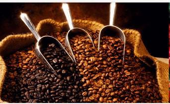 kandungan kopi