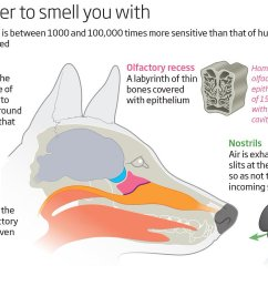 above diagram helps to illustrate how a dog s nose and the nostrils work  [ 1200 x 774 Pixel ]