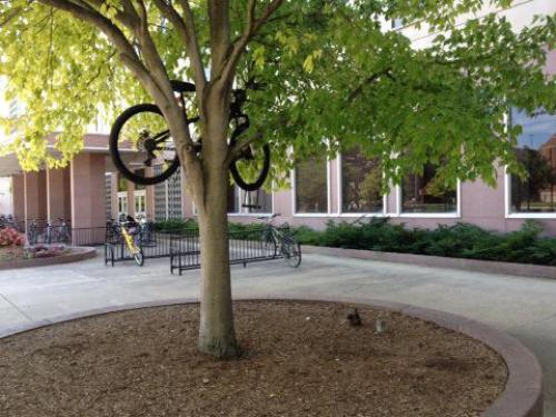 Image result for purdue bike in tree