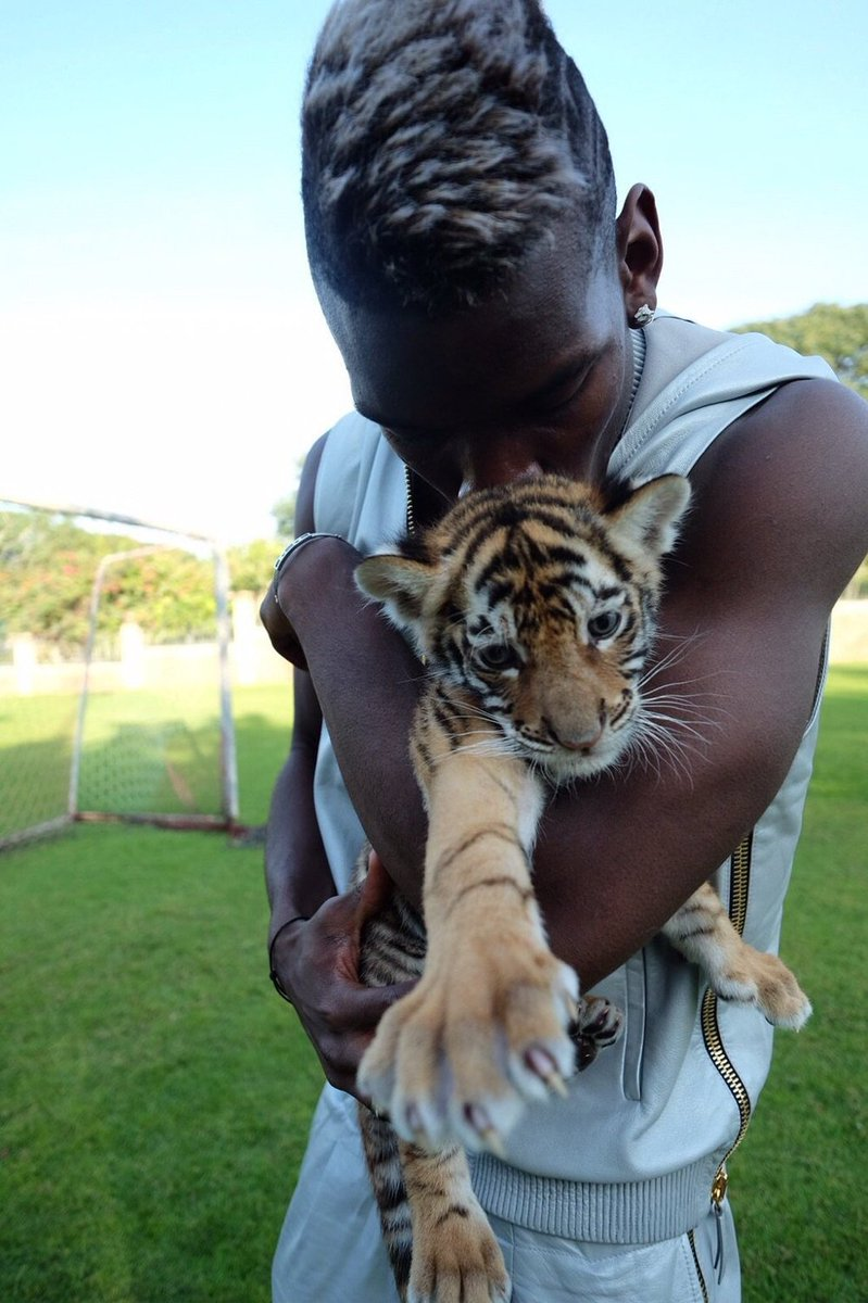 Hold A Tiger : tiger, Footballers, Animals, Twitter:,