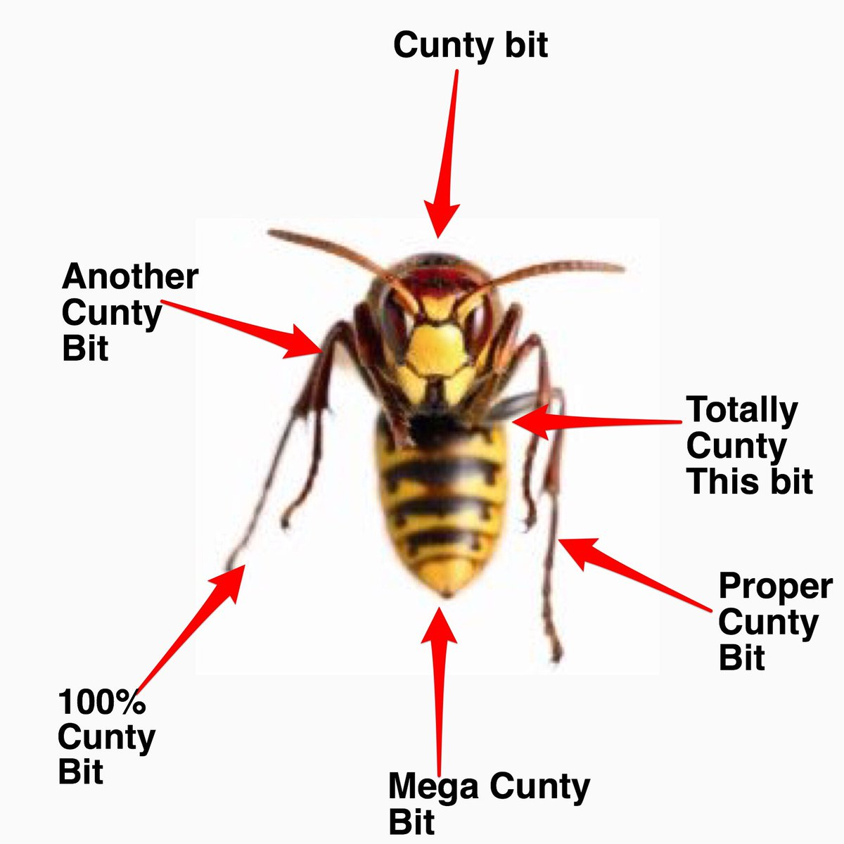 hornet anatomy diagram wiring leviton decora light dimmer switch joe heenan on twitter anatomical diagrams to explain the difference between a bee wasp https t co evn8gwrstq