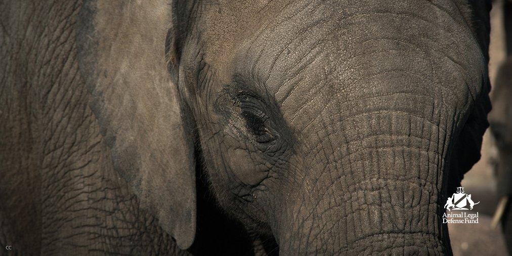 Ringling #elephants arrive in Polk City, #Florida.