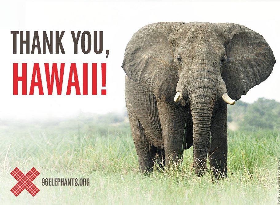 96 elephants on twitter