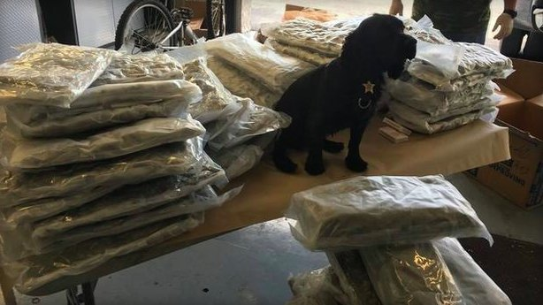 Police K9 sniffs out 72 bags of marijuana, worth over $225,000