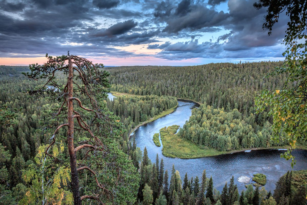 Temperatures in the taiga biome regions are spiking faster than other regions of the world; Discovering Finland On Twitter Hiking In The World S Biggest Wilderness Finland S Taiga Forest Https T Co Srwqoeo6zk Via Wanderlustmag