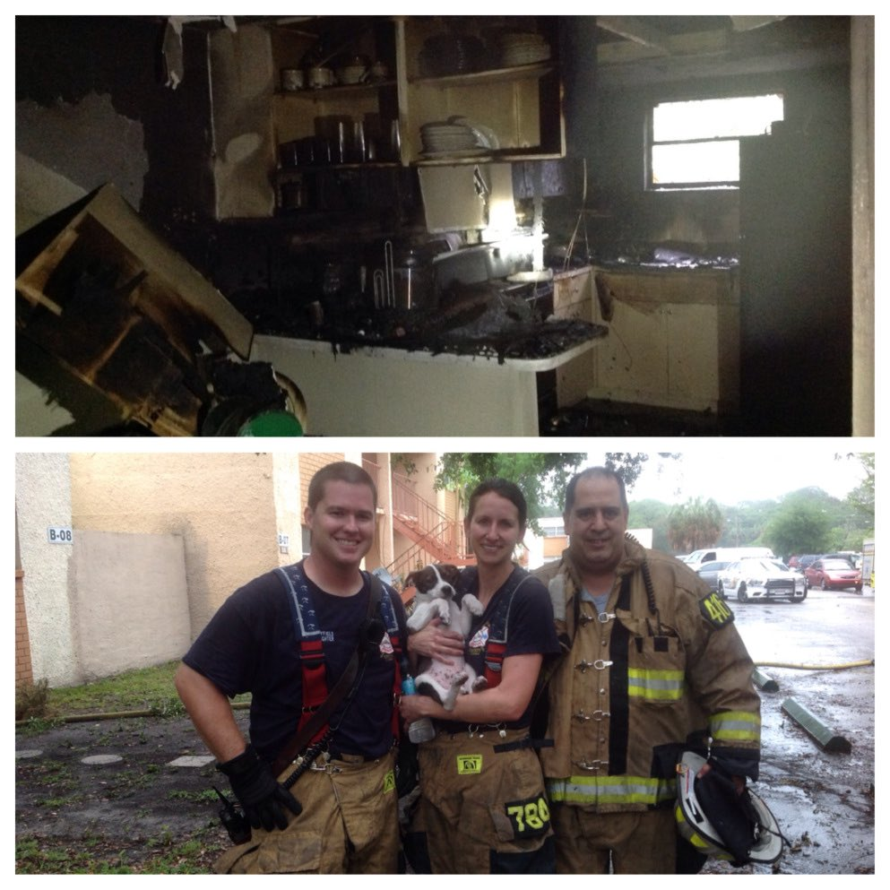#Tampa #Florida #Hero Hillsborough firefighters rescue family's puppy  via @wfla #retweet