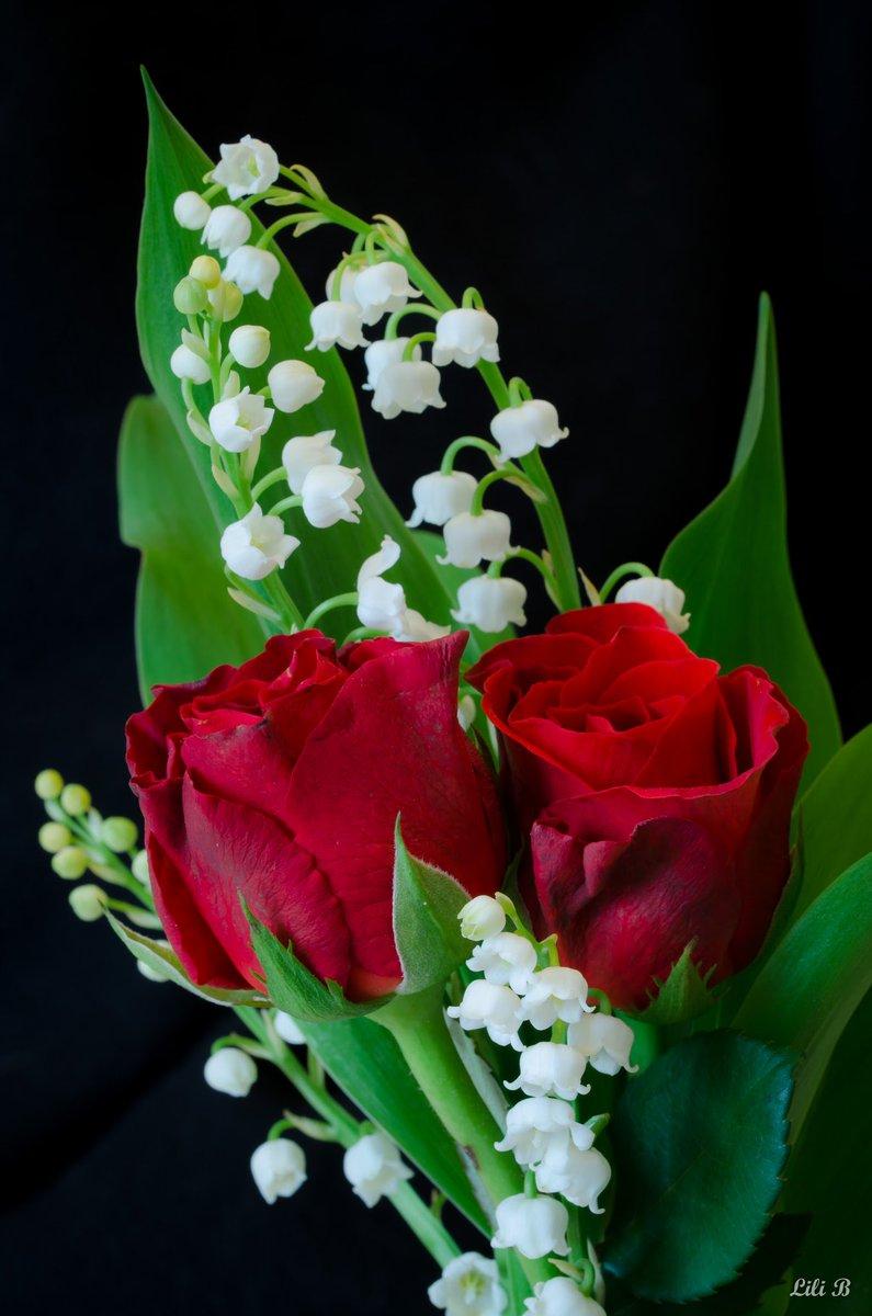 La Plus Belle Rose Du Monde : belle, monde, Altaf, Hassan, Twitterren:,