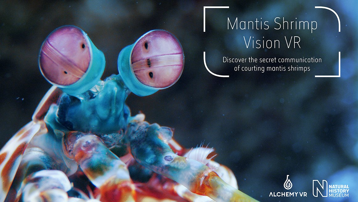 Shrimp vision: a new partnership w/@AtlanticProds brings virtual reality to #ColourAndVision