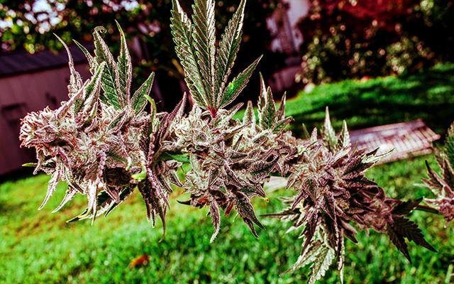 #Grow Hack: Make Your Outdoor Grow Bee Friendly