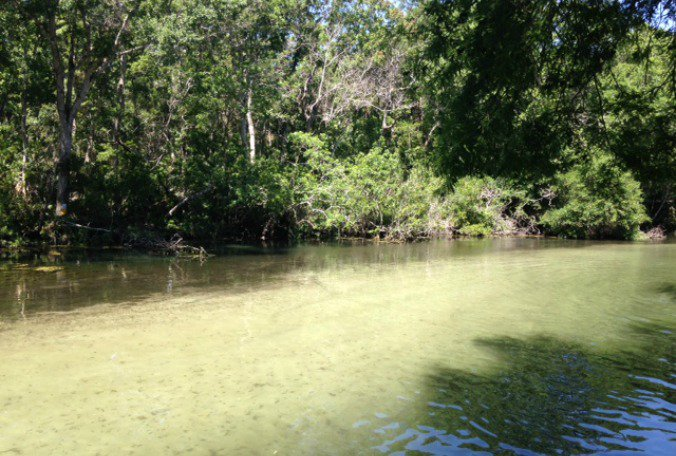 State Senator hears residents' concerns about Weeki Wachee River #Hernando