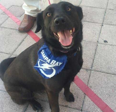 #GoBolts We think you are PAW-FECT!!! @TBLightning