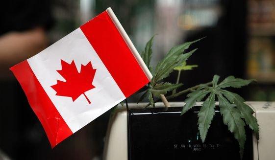 #Toronto police raid 43 marijuana dispensaries,seize hundreds of pounds of pot   #MME #Canada