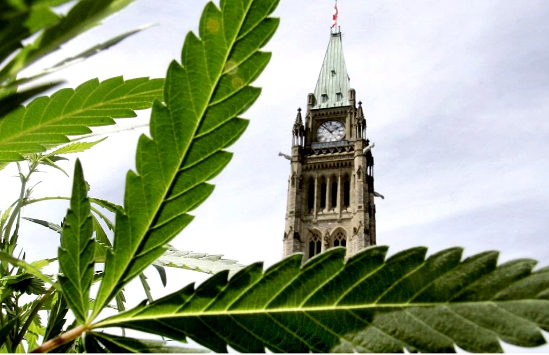 NDP Demands Immediate Decriminalization of Marijuana #NDP #Liberal #marijuanalaw #canada