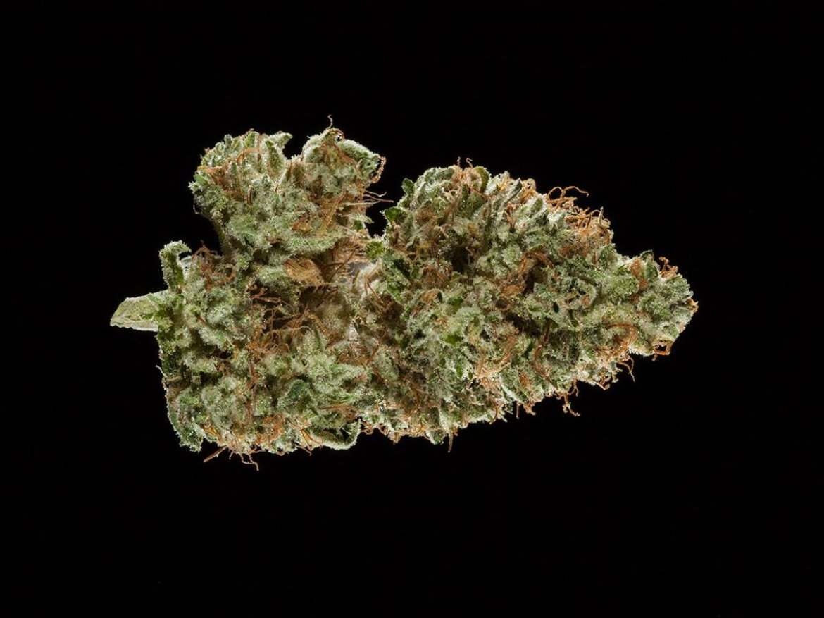 #Indica crazy? Check out the 2016 Michigan Medical #CannabisCup: Top 10 Indica Flowers.