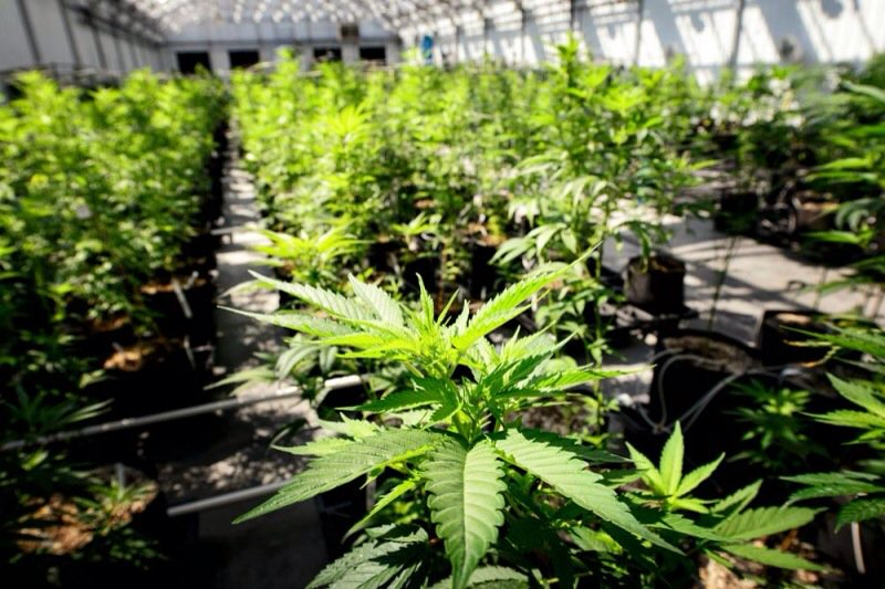 #Pennsylvania is making a move to jumpstart medical #marijuana program  #MME #PA #epilepsy