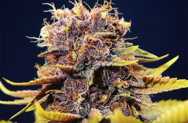 PIX OF THE CROP: 06.24.16. Check Out Our Favorite User-Submitted Grows of the Week.