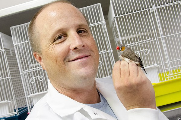 Stressed birds attract mosquitoes -- @USouthFlorida scientists