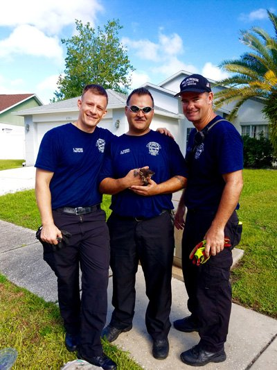 Aw! Crew from @HillsFireRescue rescue a kitten that was stuck in a storm drain for two days.
