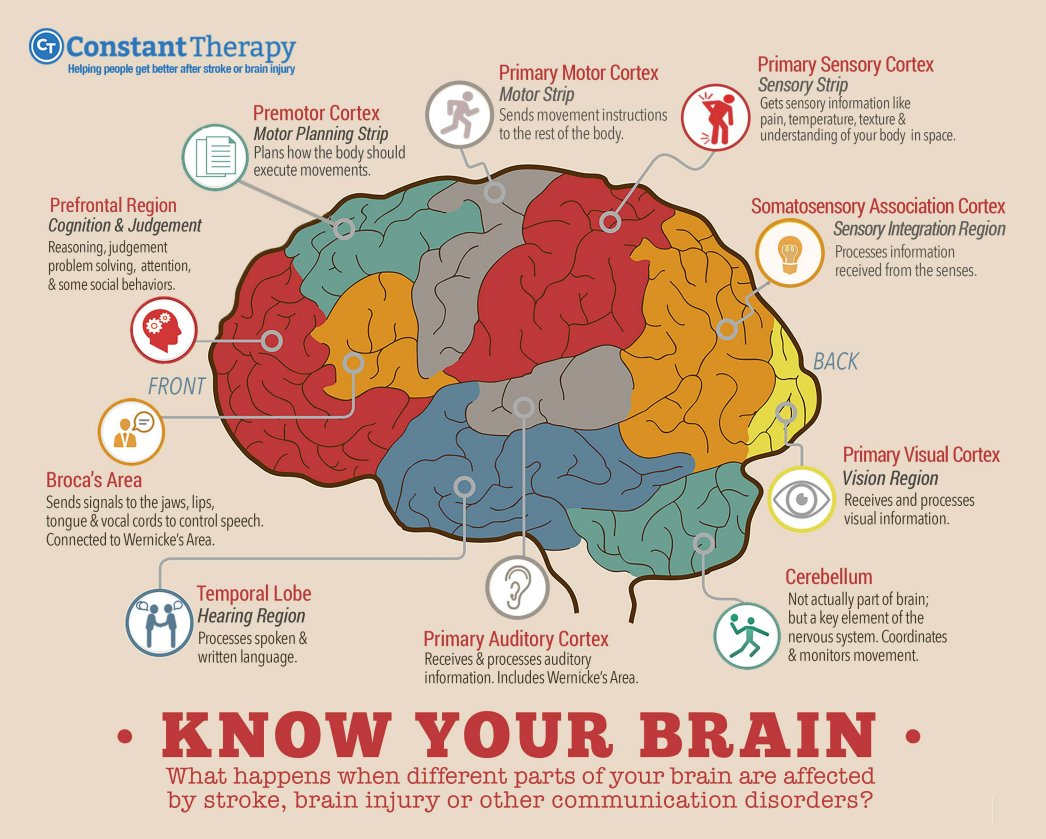 Sign Against Stroke On Twitter What Happens When Different Parts Of Your Brain Are Affected