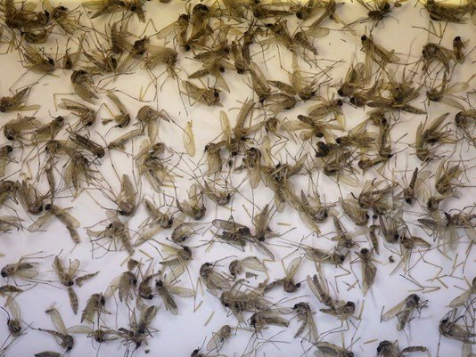 Does private mosquito control work?  @WTSPJenny is getting those answers for you:
