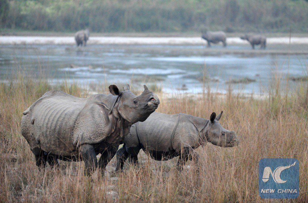 If We Wish To Save The Javan Rhinoceros We Must Work To