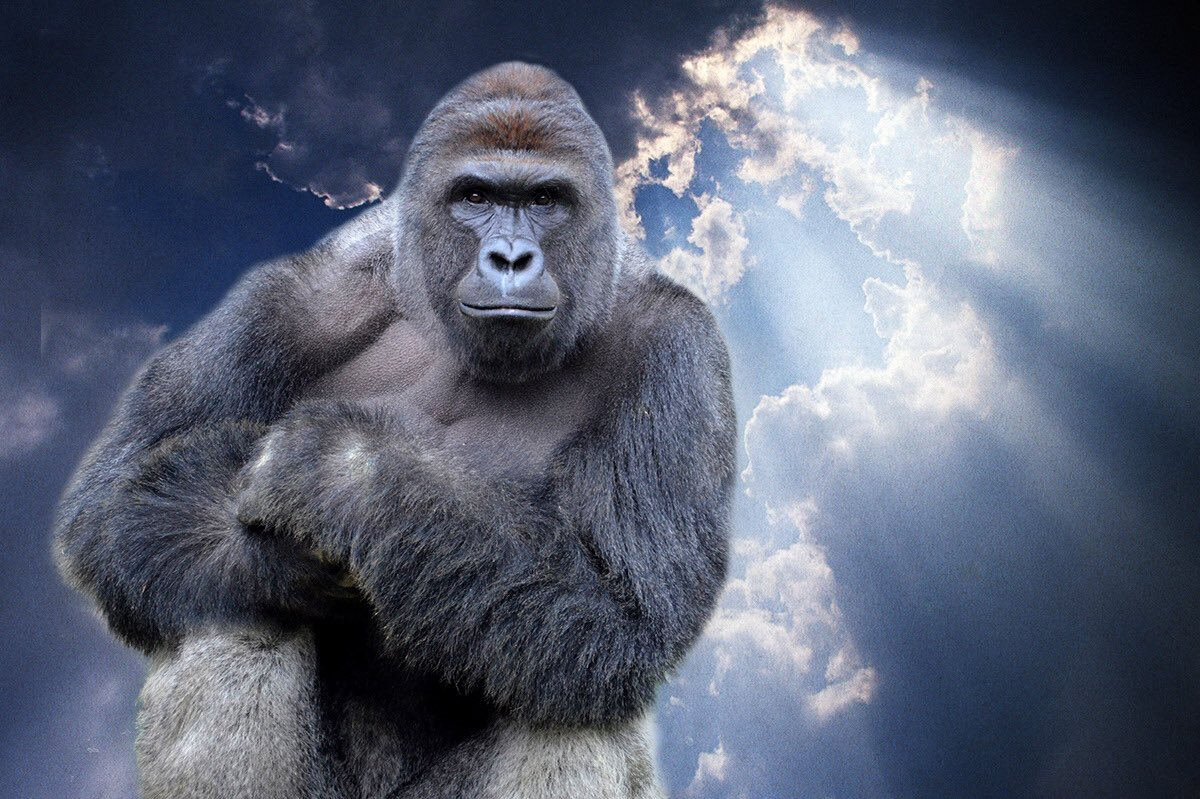 bantu the gorilla ballsout4bantu