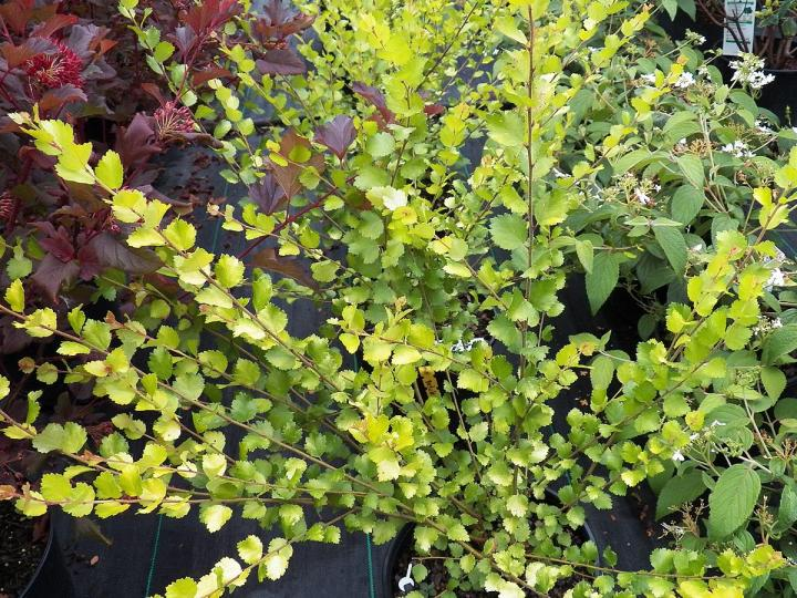 oriental garden plants - garden design ideas