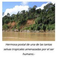 Natura M. Ambiental (@naturaambiental) | Twitter