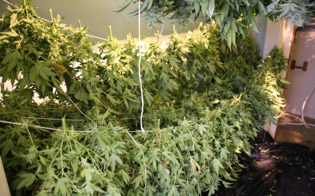 #NEW Nico's Nuggets: Beginner Harvest Tips for the Fall Season.