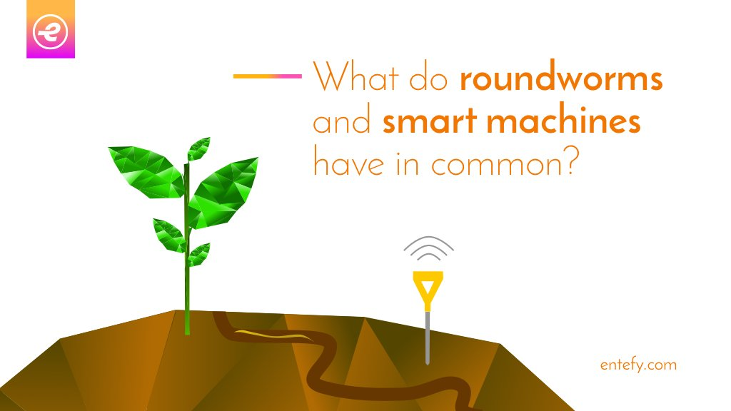 These little gardeners got Darwin thinking.  #innovation #digital #complexity #IoT #startup