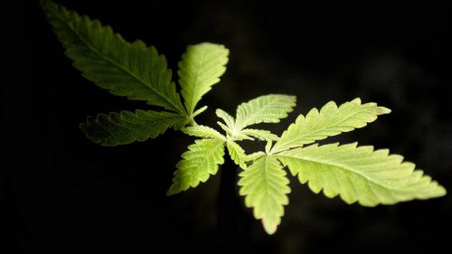 .@Gallup Poll: 60 Percent of Americans Support #Legalization