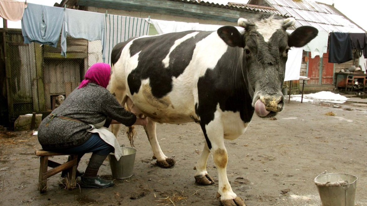 A new device allows cows to text message their farmers when they're sick  #IoT @AerisM2M