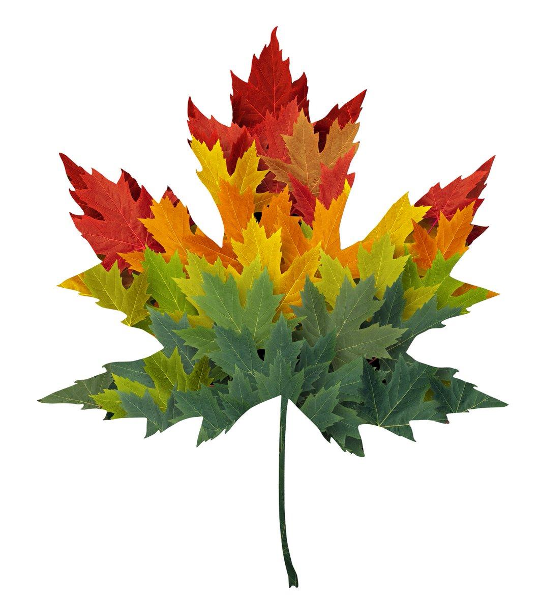 Maple Leaf Wallpaper For Fall Season Statistics Canada Statcan Eng Twitter