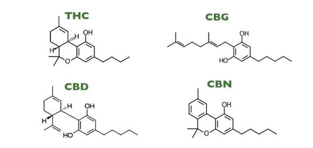 Cannabinoids May Treat Neuropathic Synptoms and Neuroinflammatory Responses [Study].