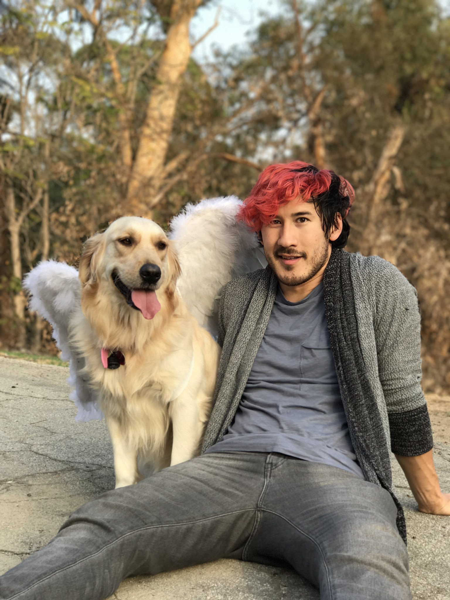 Cute Dog Memes Wallpaper Markiplier On Twitter Quot She S My Favorite