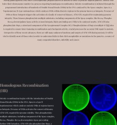 we will post interesting info about meiosis recombination dna repair dna damage response and cell cycle regulation every now and then  [ 862 x 1200 Pixel ]