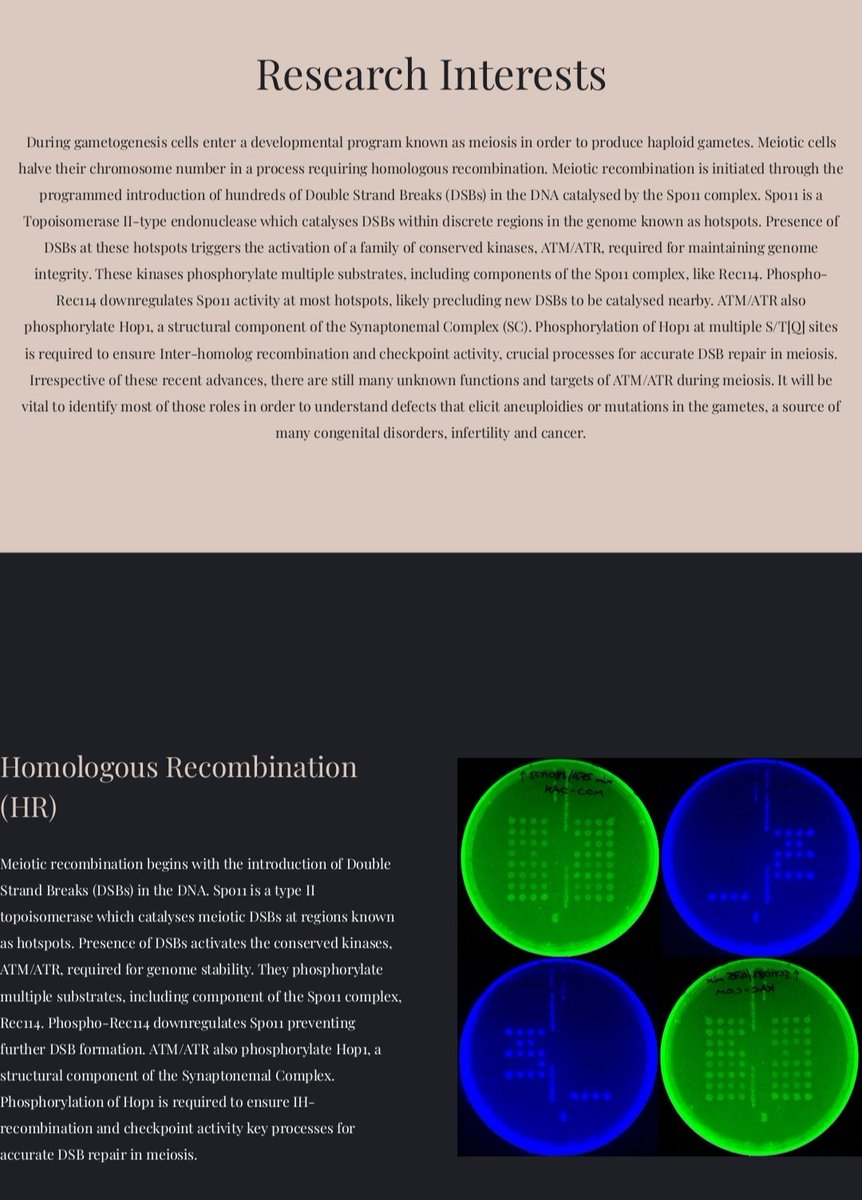 hight resolution of we will post interesting info about meiosis recombination dna repair dna damage response and cell cycle regulation every now and then