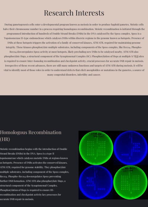 small resolution of we will post interesting info about meiosis recombination dna repair dna damage response and cell cycle regulation every now and then