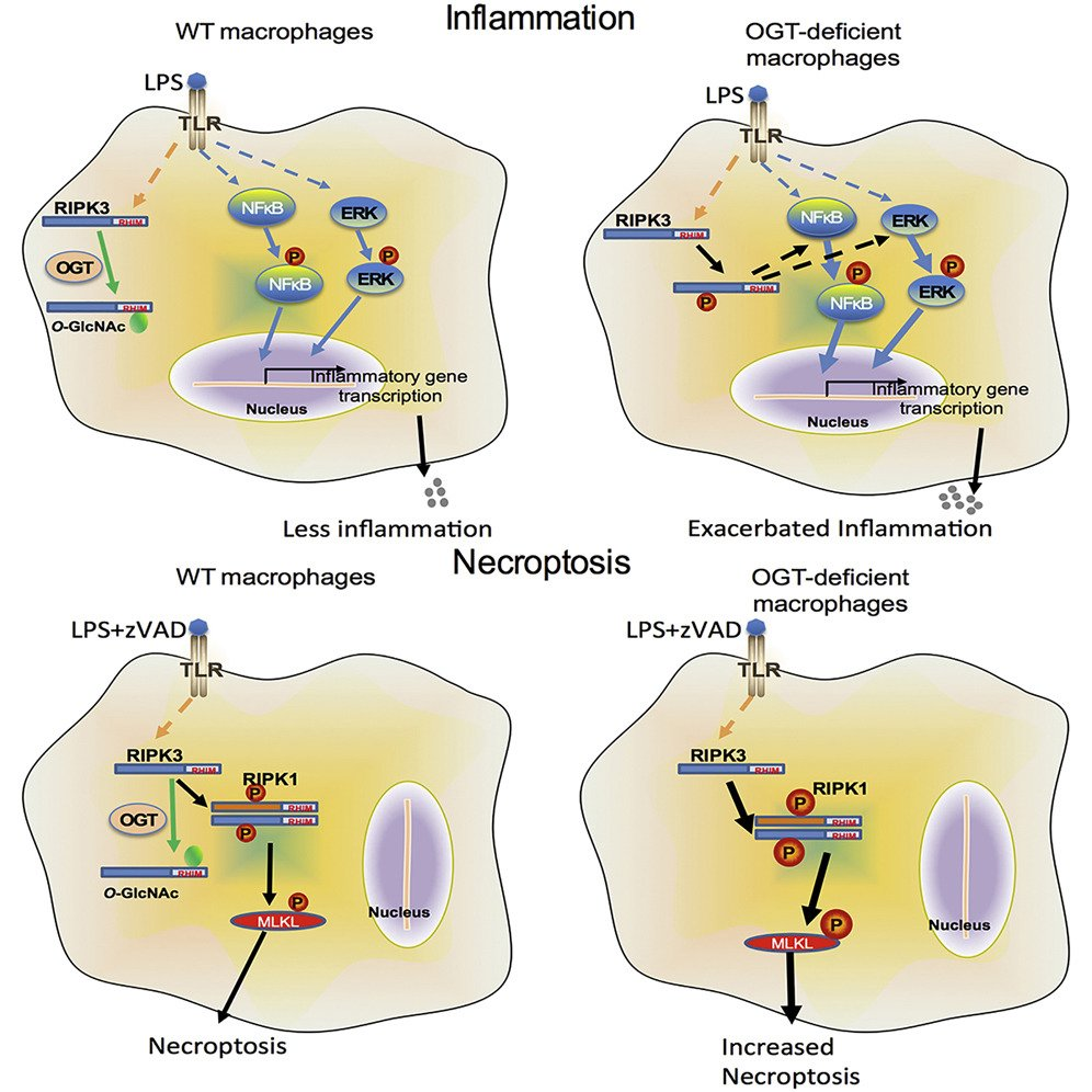hight resolution of immunometabolism network