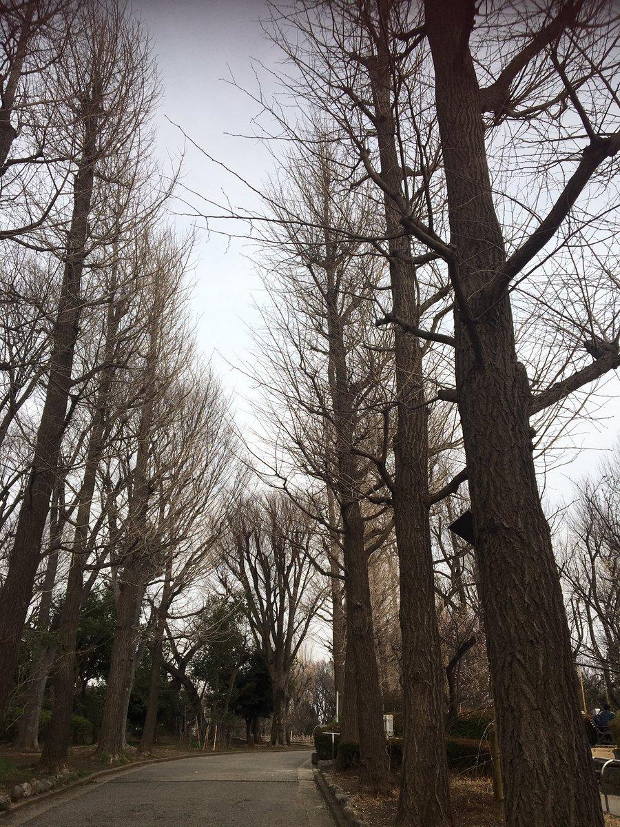 test ツイッターメディア - 8年前の今日3.15、曇天の異様さに震えながら、なぜか私は木立ちの中を2時間ほど歩き回り被曝した。東京が高濃度の放射能に汚染された日。 https://t.co/8i53NVMDqo