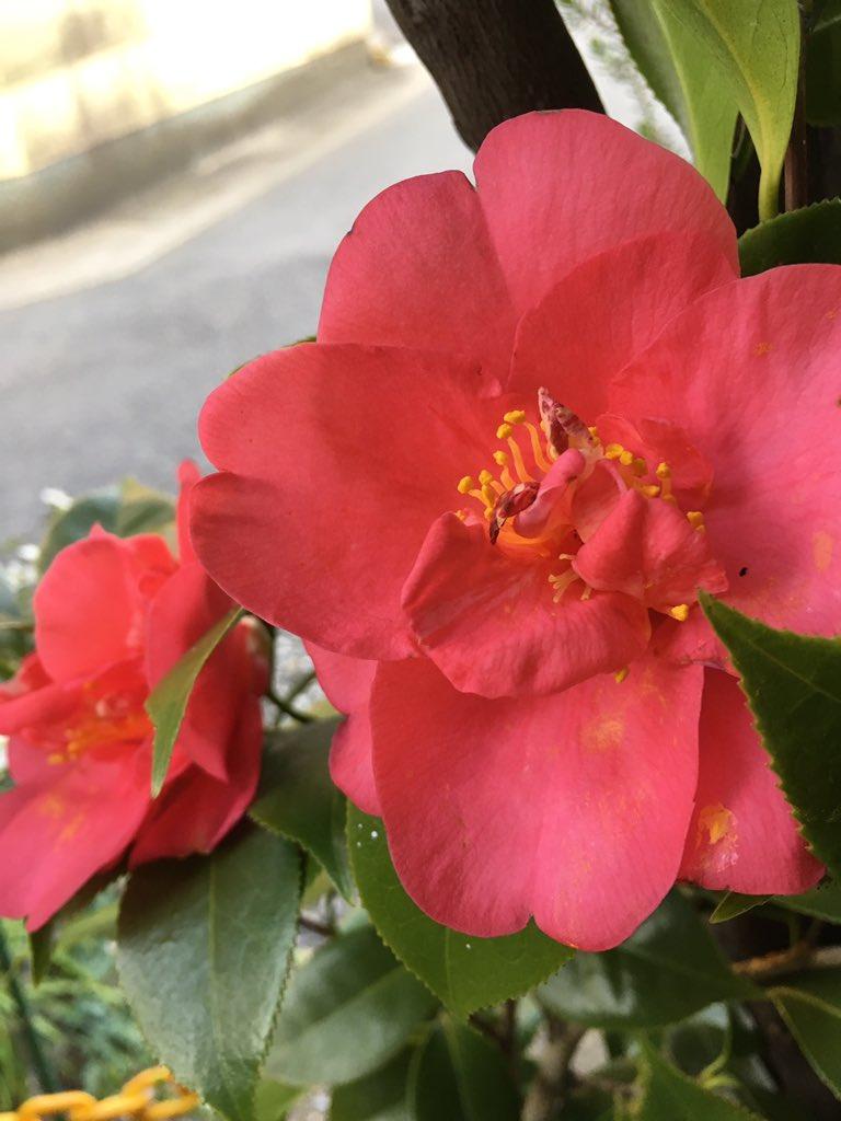 test ツイッターメディア - 朝の庭の紅白  3/27  6:40 写す https://t.co/6RUdSjzunS