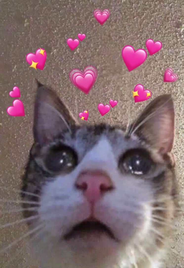 Cat Hearts Meme : hearts, Heart, Memes, (@catheartmemes), Twitter