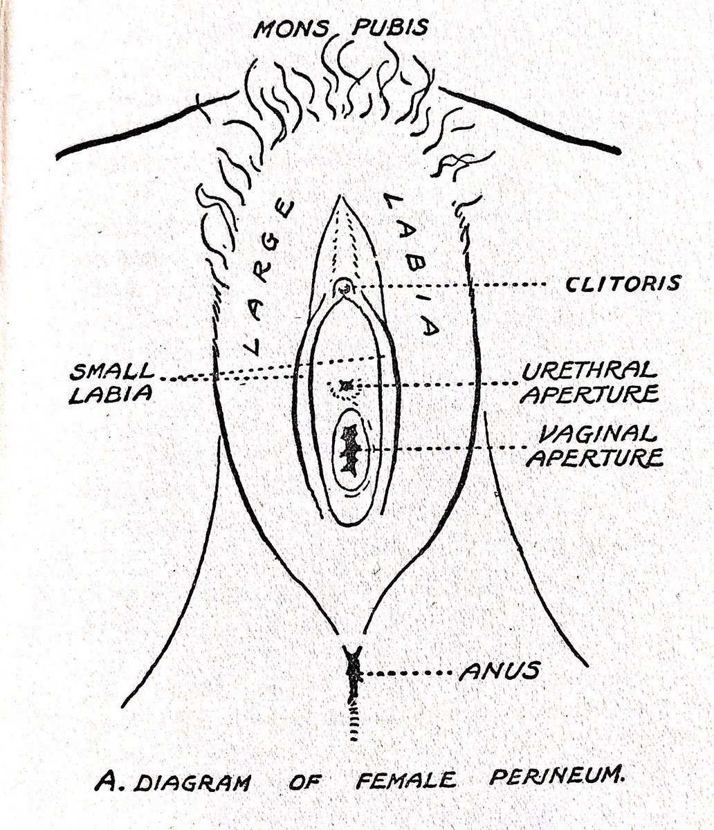hight resolution of historical sex guides