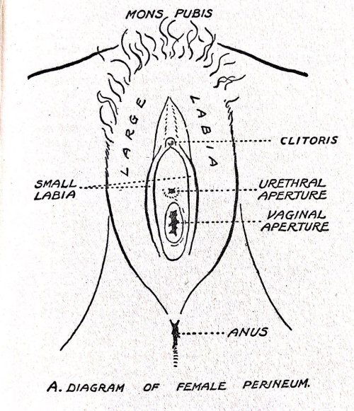 small resolution of historical sex guides