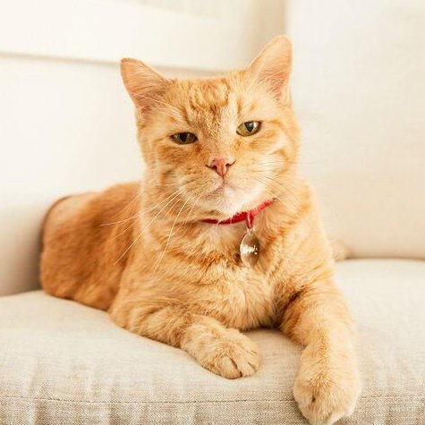 morris the 9lives cat
