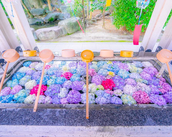 福岡県の春日神社も紫陽花を手水舎に浮かべていた - Togetter