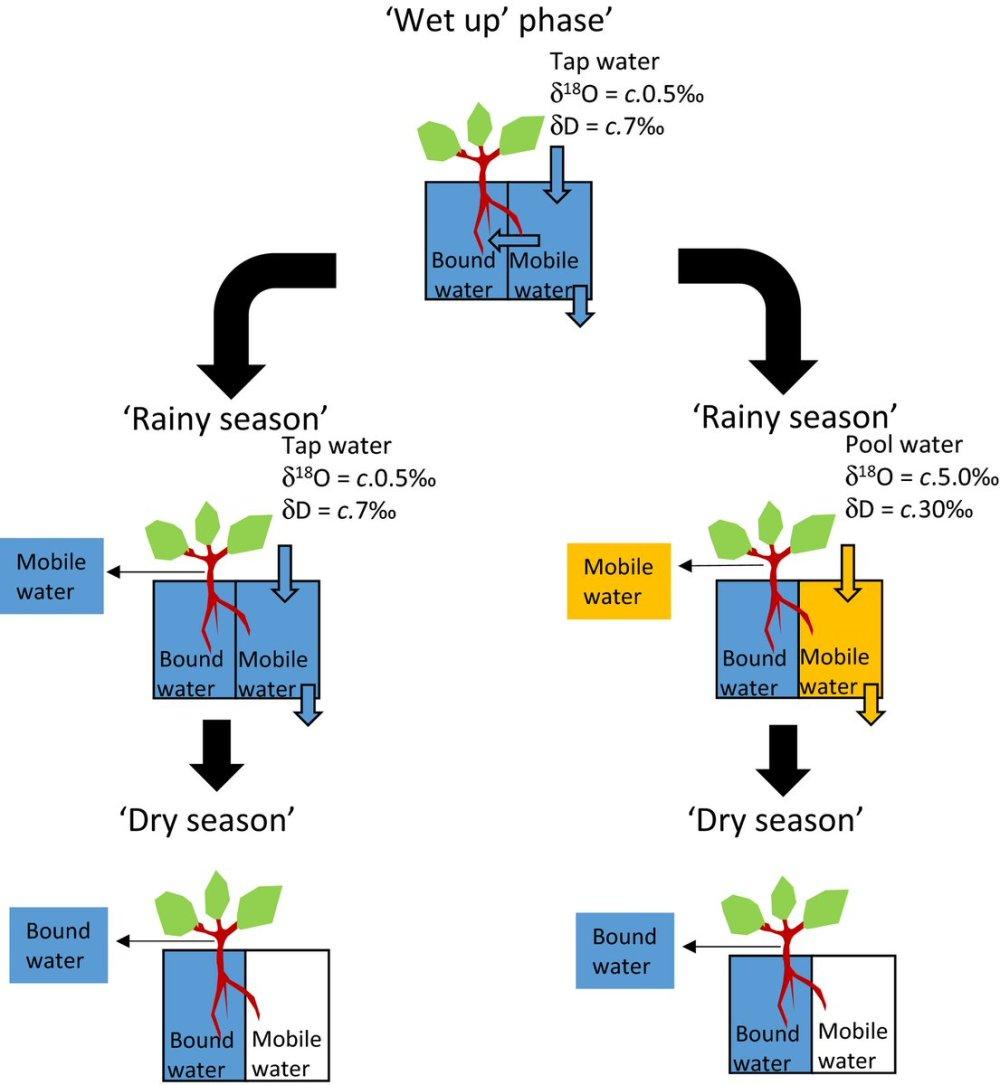 medium resolution of new phytologist